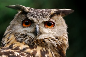 A wise owl once shared his key to achieving wealth