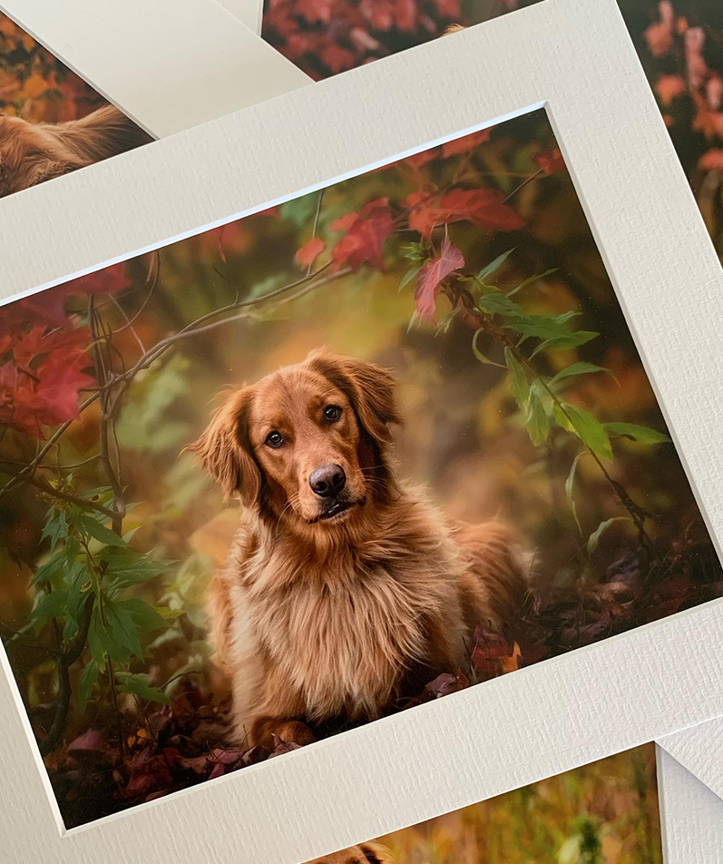 Matted Prints by Queensberry